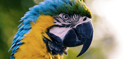 Bond - papegaai
